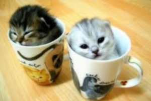 coffee-cup-kittens