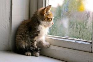 kitten-rain