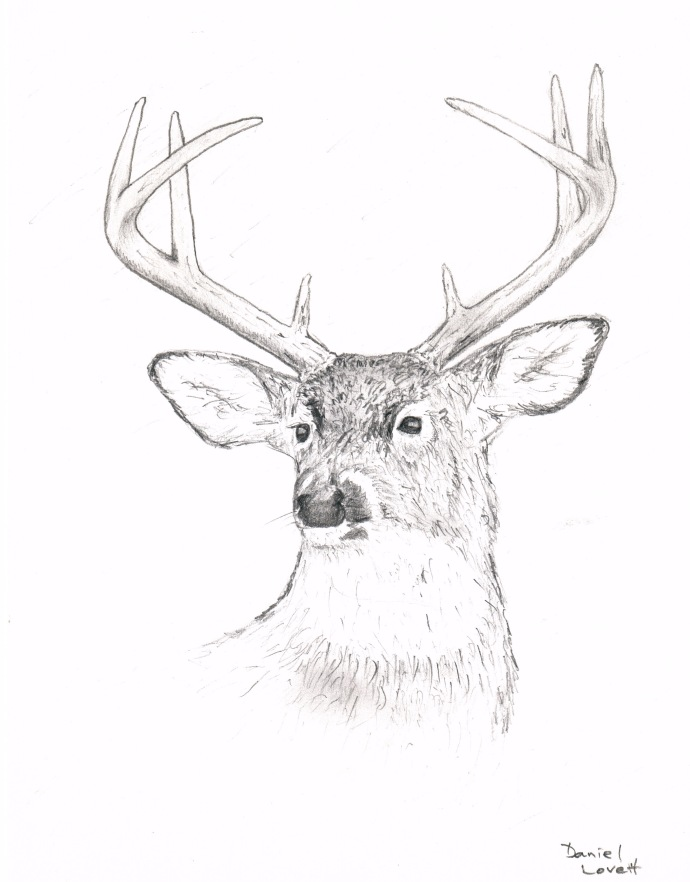 whitetail-buck-portrait-drawing